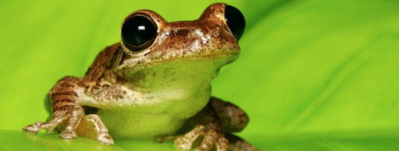 Bloggin Frogs